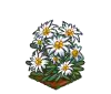 Perfect Edelweiss-icon