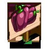 Australian Purple Pepper Mastery Sign-icon