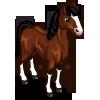 Irish Hunter Horse-icon