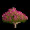 Crape Myrtle Tree-icon