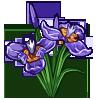 Walking Iris-icon