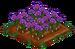 Saffron 100