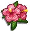 Pink Hibiscus-icon