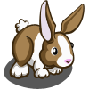 Brown Dutch Rabbit-icon