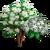 Blackhaw Tree-icon