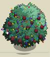 Fig Tree6-icon