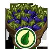 Organic Eggplant Bushel-icon