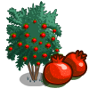 Angel Red Pomegranate Tree-icon.png