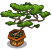 Bonsai Tree-icon