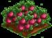 Appleberry 100