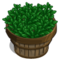 Green Tea Bushel-icon