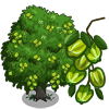 Arjuna Tree-icon.png
