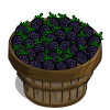 Black Berries Bushel-icon
