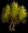 Olive1-icon