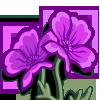 Purple Poppy-icon