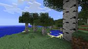 Birchtrees