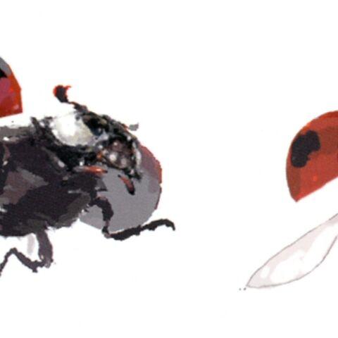 Ladybug artwork