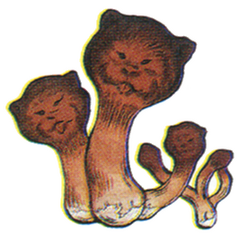 Ottershroom.