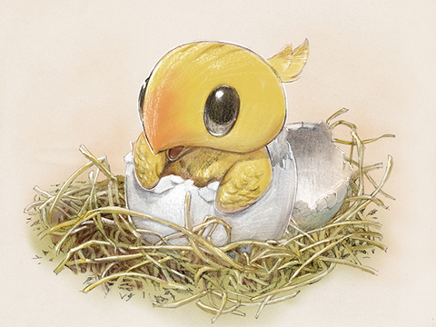 File:Chocobo Hatchling.jpg