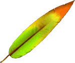 File:Red XIII Feather FF7.png