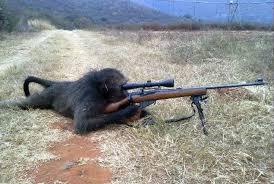 File:Gorilla warfare.jpg