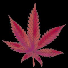 File:Cannabis cinderella.png