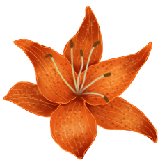 File:Tiger lily.png