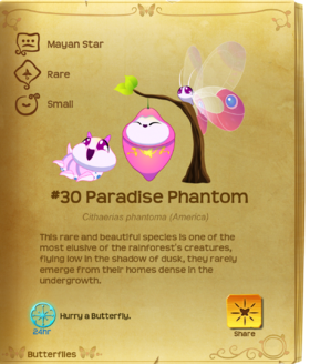 Paradise phantom butterfly - photo#4