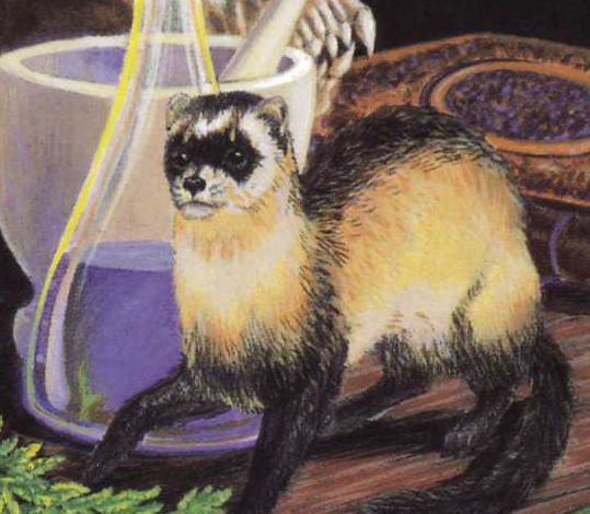 File:Ferret.png