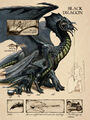 Black dragon anatomy - Lars Grant-West.jpg