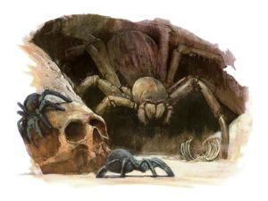 Subterranean spiders