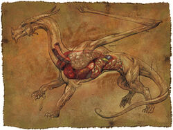 Dragon anatomy - Mark Nelson