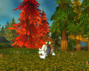 050724 Farbenfrohe Bäume.jpg