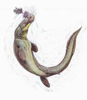 Prognathodon3