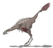 Caudipteryx2mmartyniuk