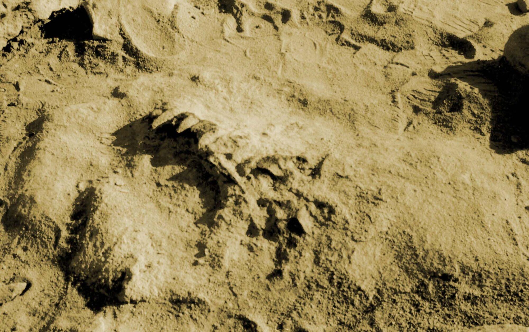 Ischigualasto Formation | Fossil Wiki | Fandom powered by ...