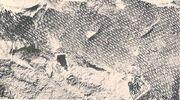 Tylosaurus skin