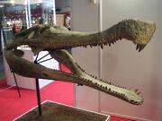 Sarcosuchus imperator skull