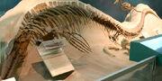 Tylosaurus proriger