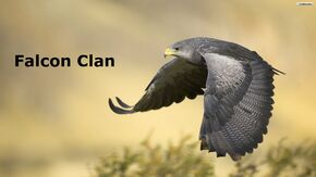 Falcon clan pic