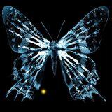600px-ButterflyGlyph.jpg