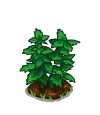 Peppermint Sapling-icon