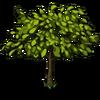 Cherry Tree Big-icon