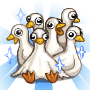 Share Raise Geese