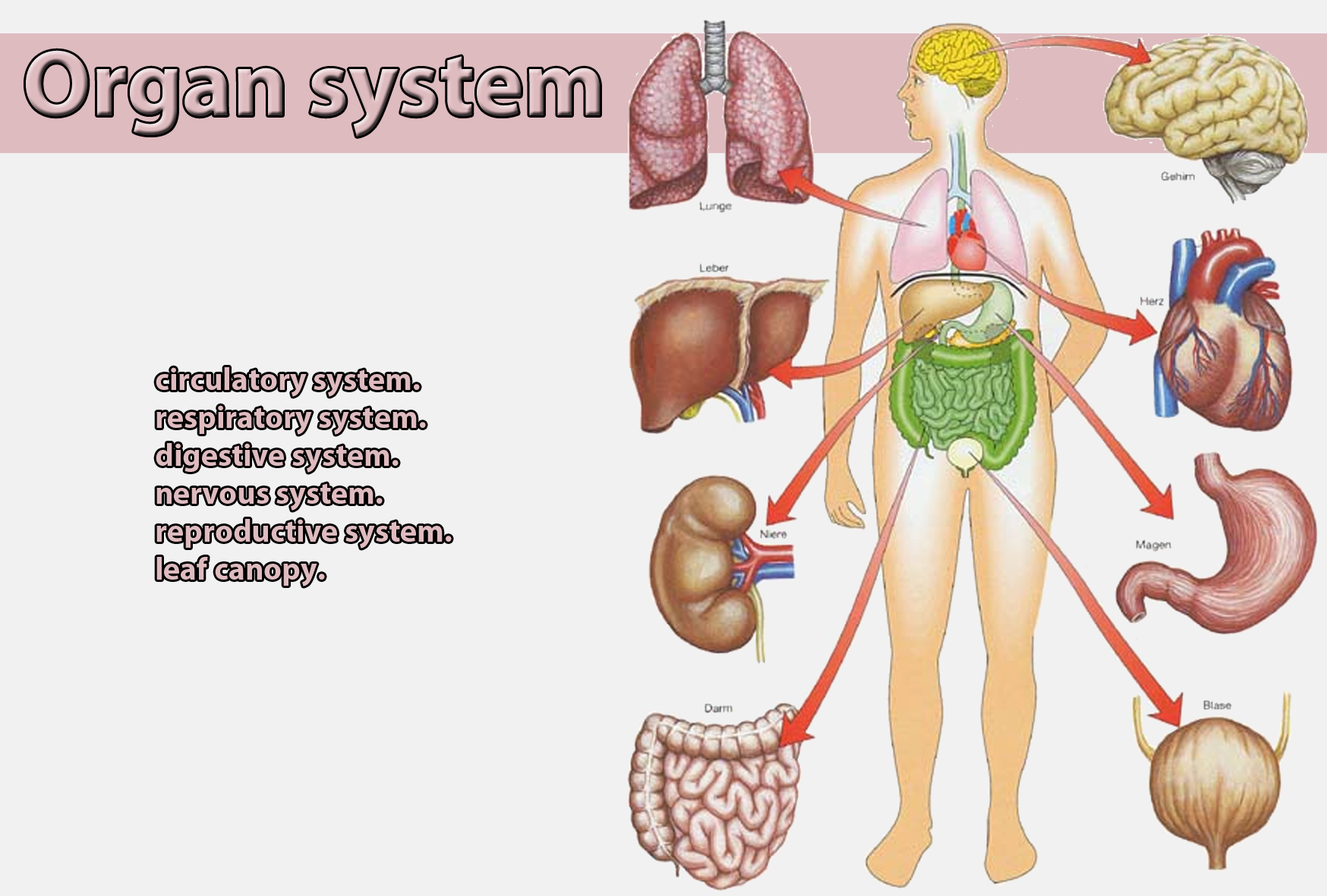 Pictures of organ systems in the body