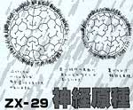 ZX 29