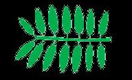 Leaf morphology Even pinnate