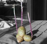 Potato Spindly Sprouts