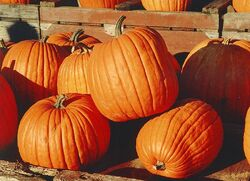 800px-Pumpkins-