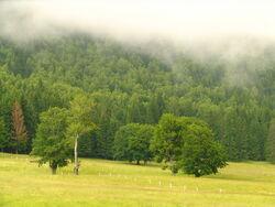 Field Harghita bgiu.jpg